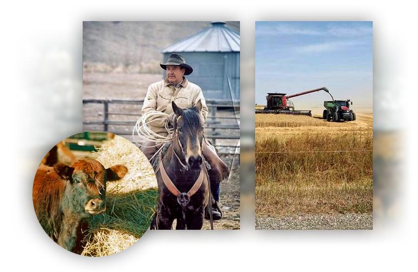 Cow-Horseback-Harvest Montage