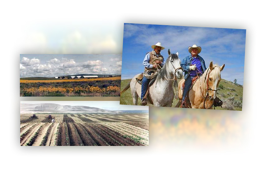 Cowboys and Farm Fields Montage