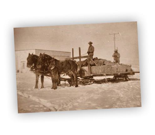 Horse Drawn Sled in Winter